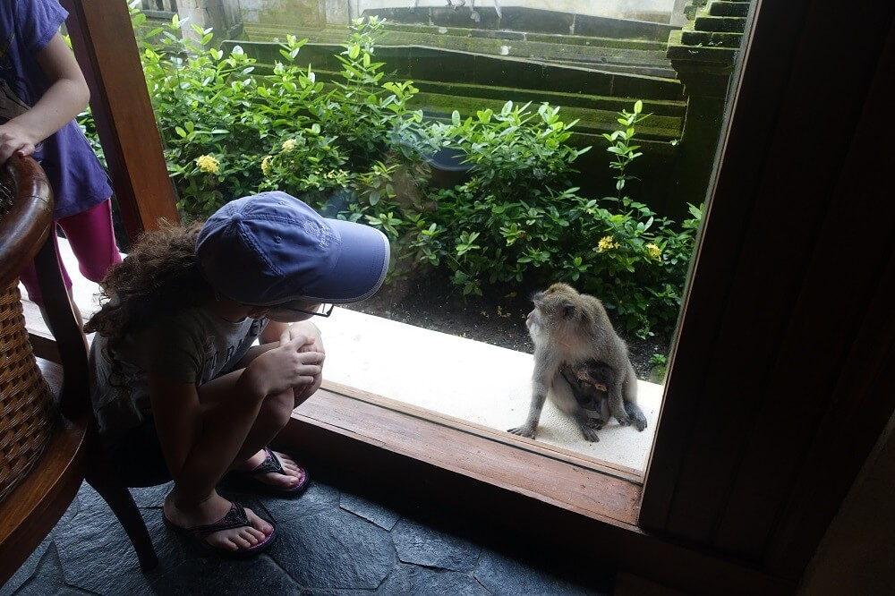 Monkeys outside the breakfast room