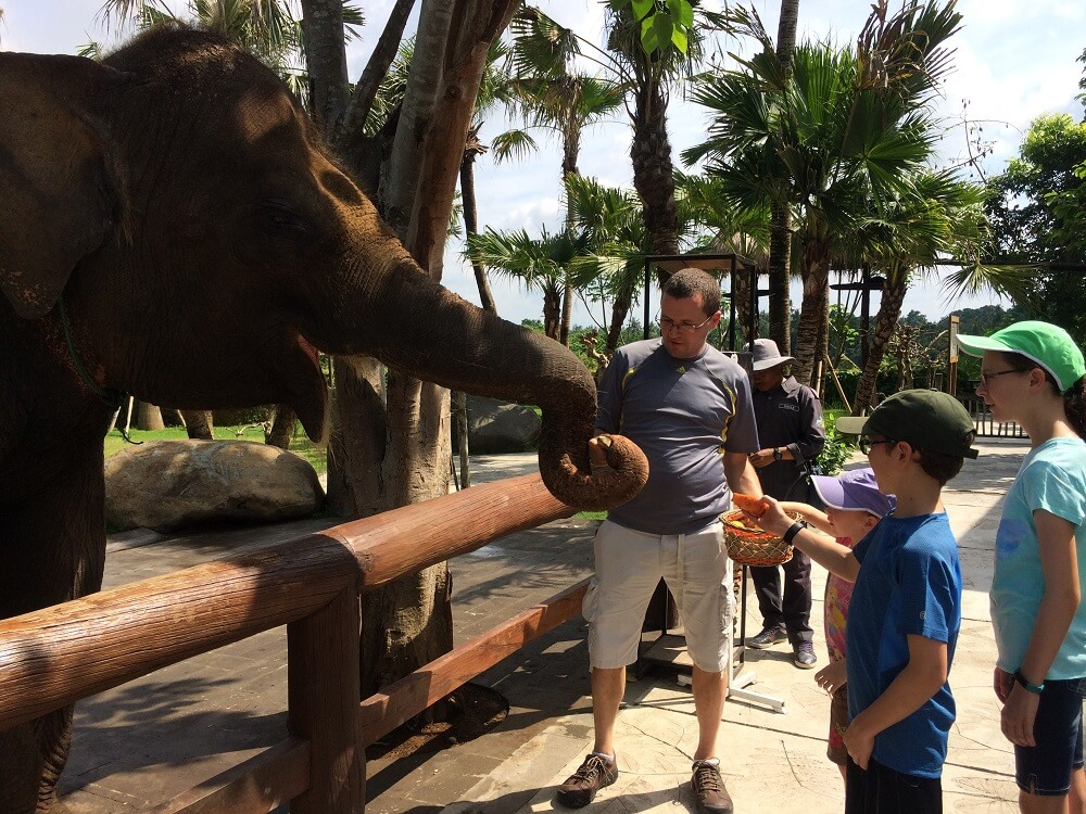 Feeding an elephant at Bali Zoo