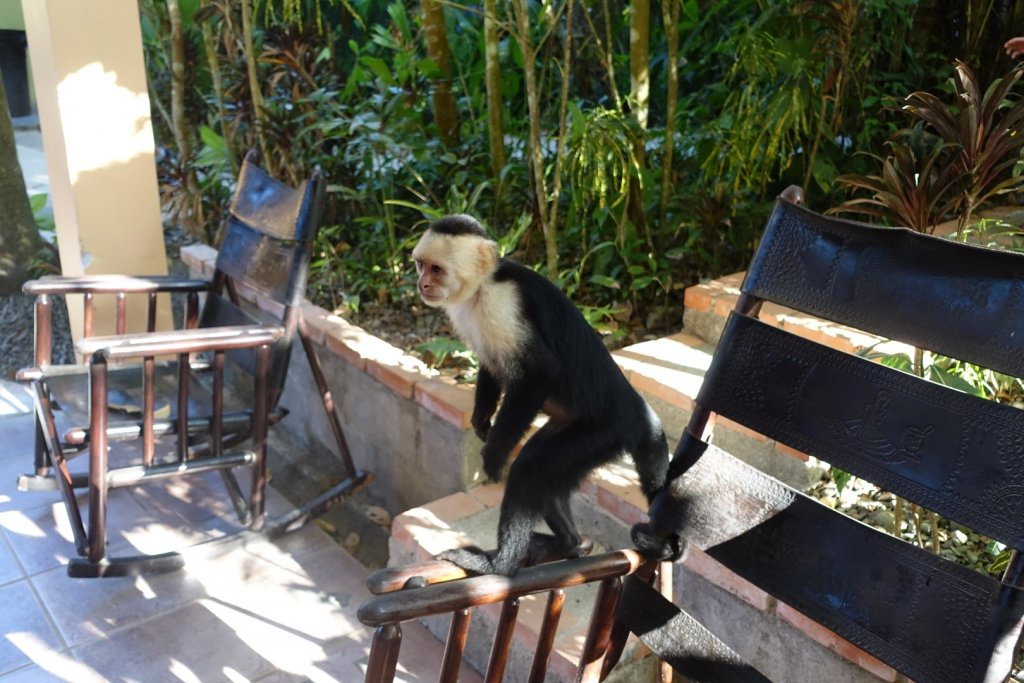 a monkey standing on a chair