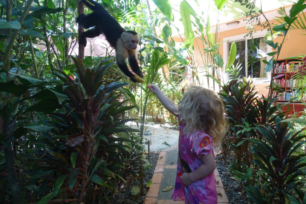 feeding a banana to a monkey