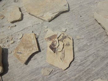 pieces of fossil rock