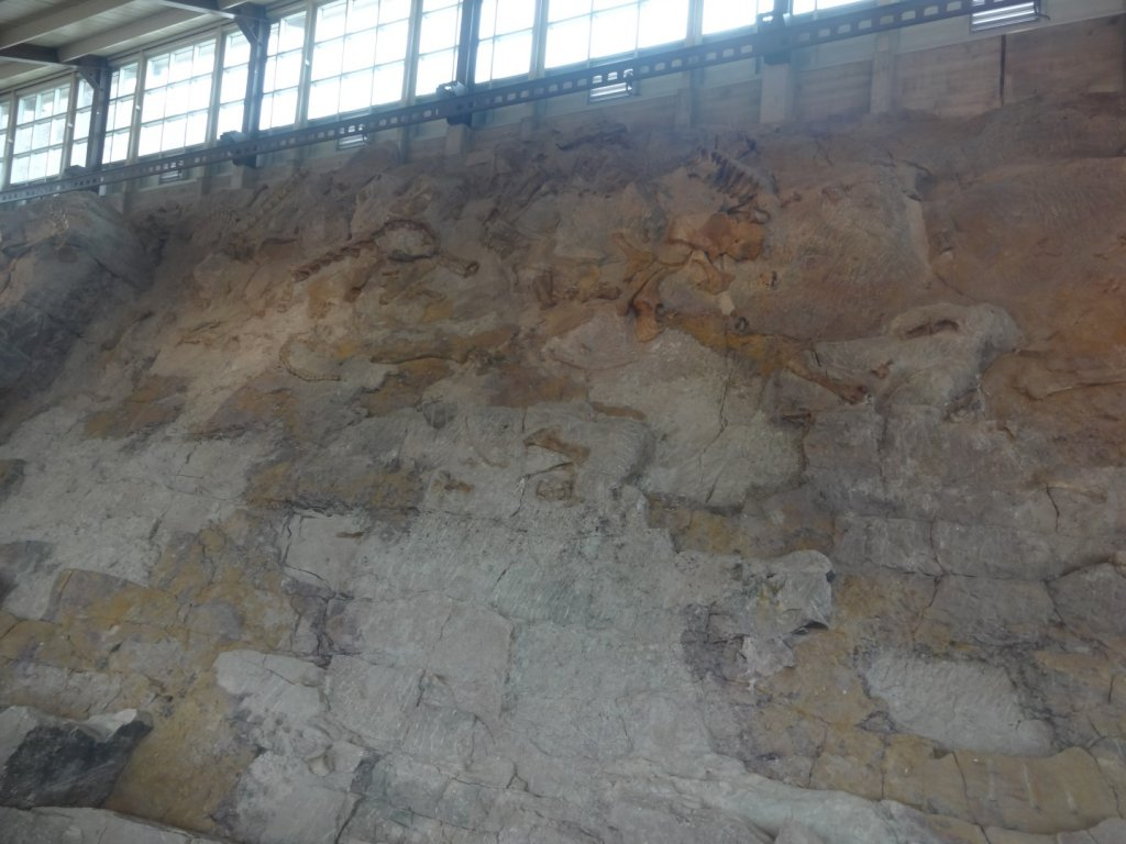 Wall of dinosaur bones