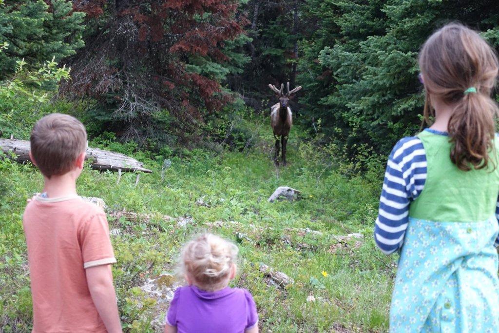 kids looking at an elk