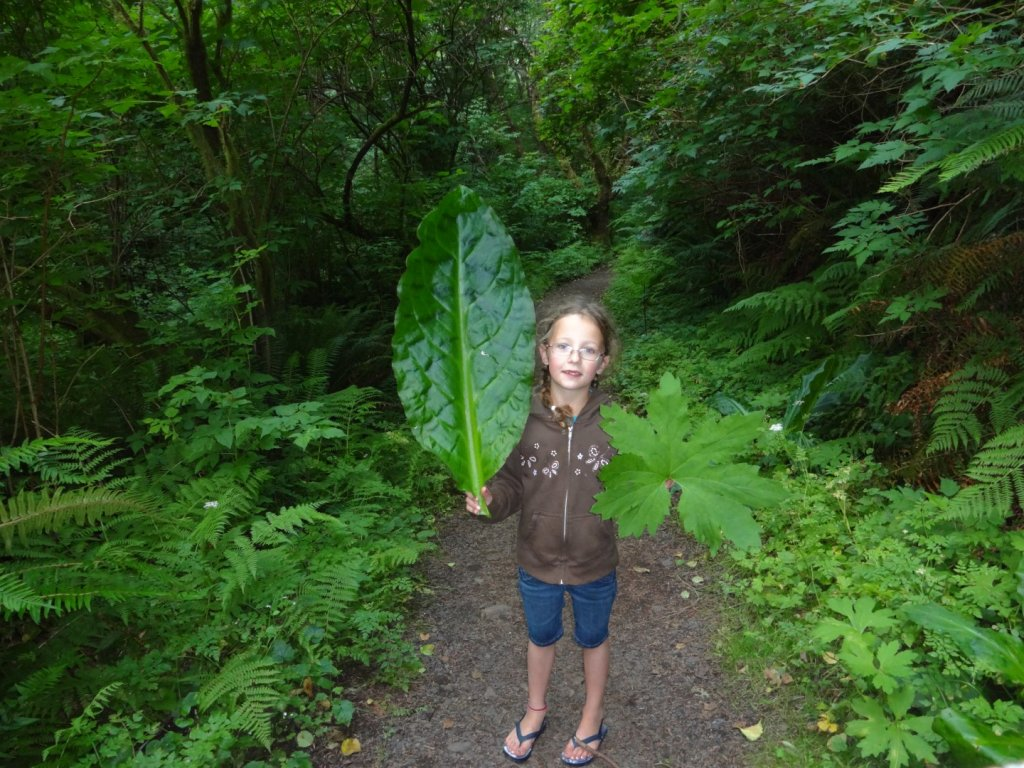 leafs almost as big as my daughter!