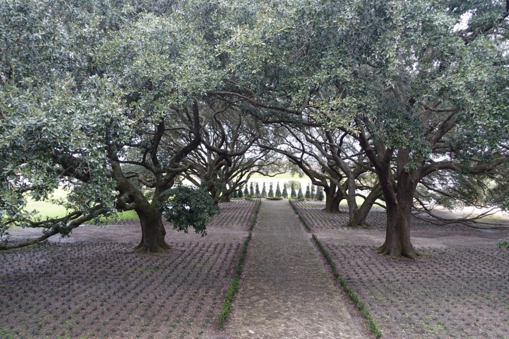 path with large trees on both sides at slave plantation