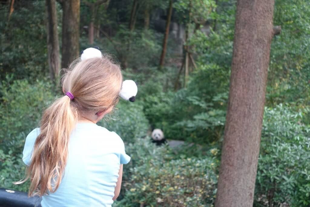 Watching a panda