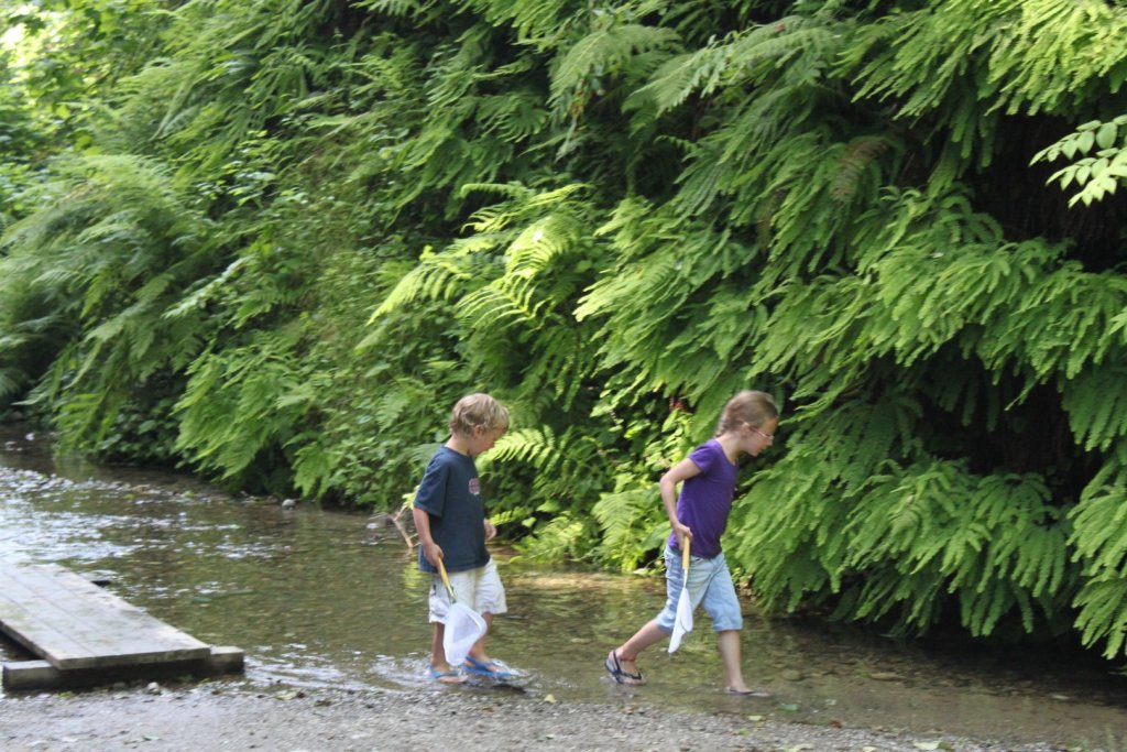 kids looking for minnows in the stream