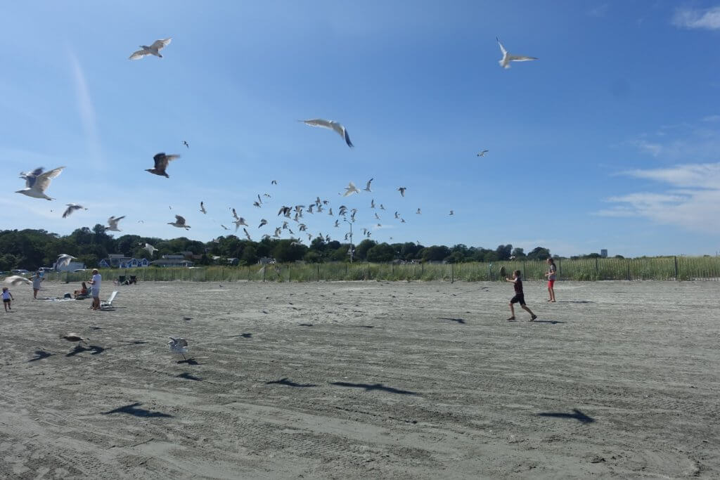 kids chasing seagulls on the beach