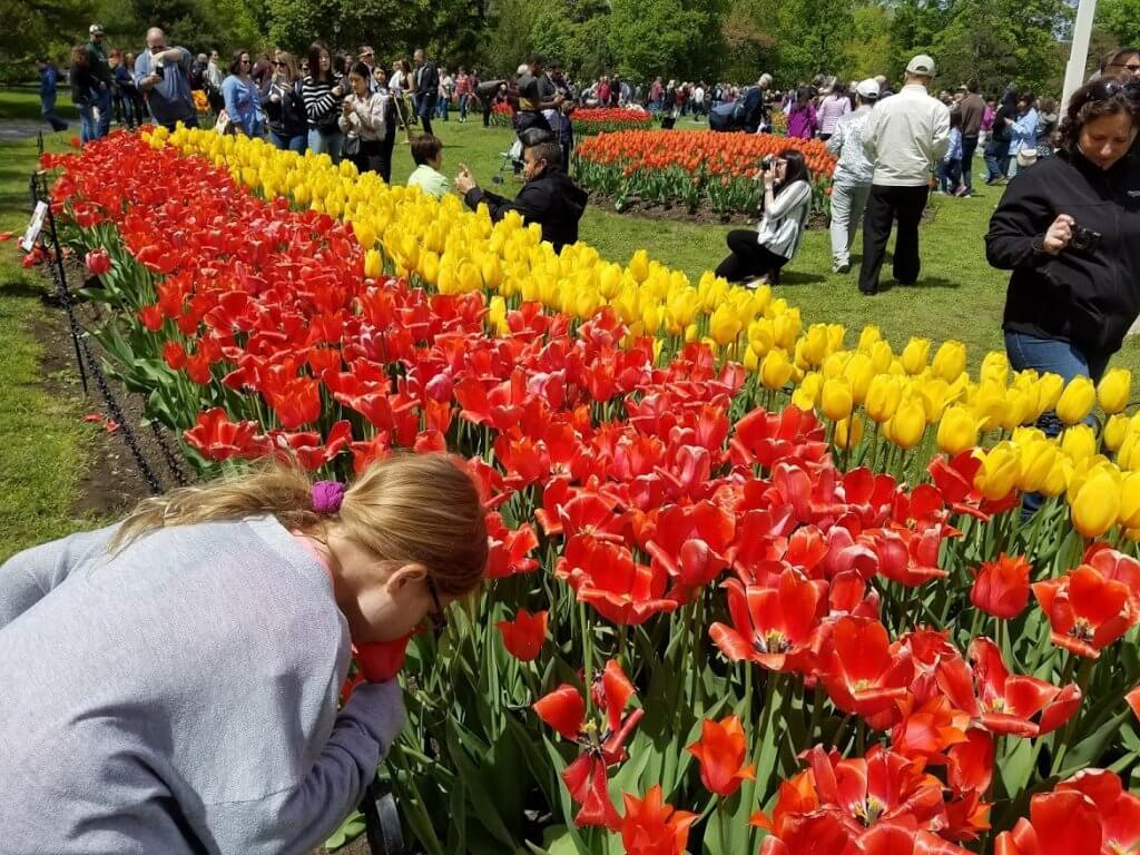girl smelling tulips