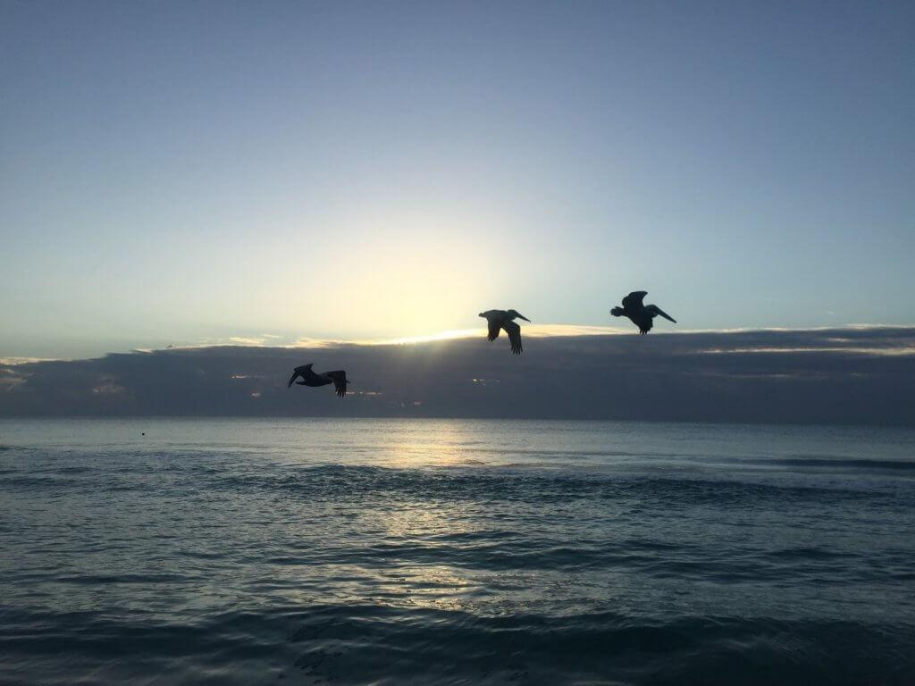 Pelicans against the sunrise