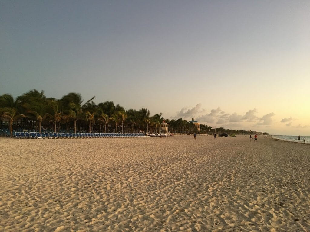 beach with louge chairs and palm trees