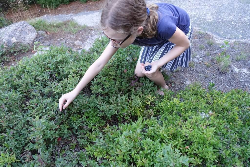girl picking wild berries