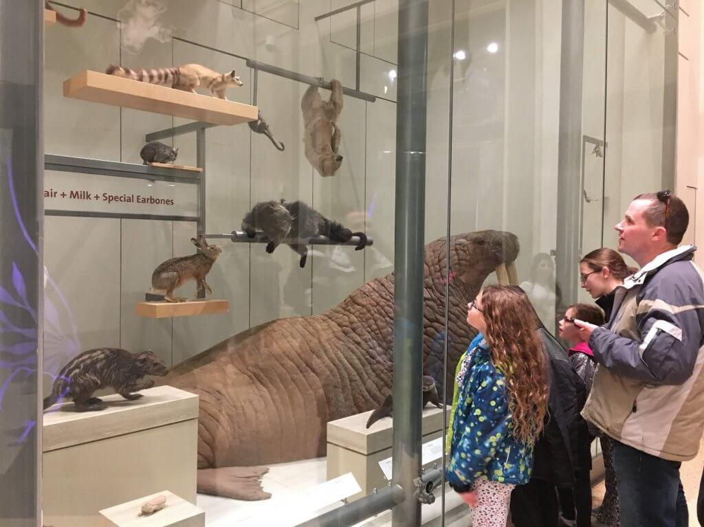 people looking at museum display