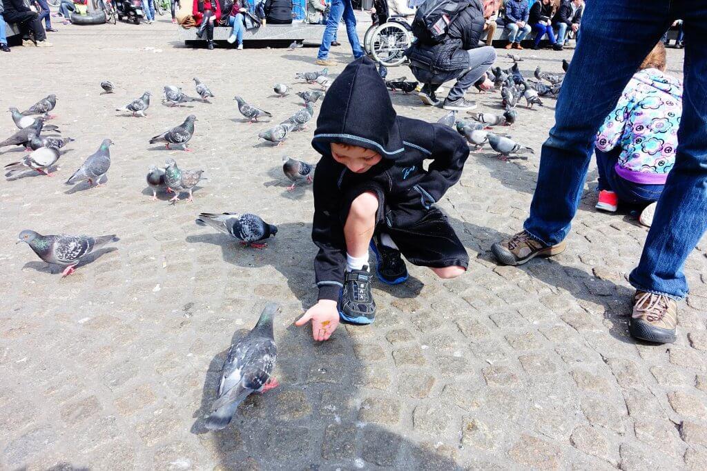 boy feeding pigeon