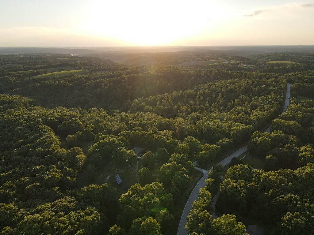treetops and road