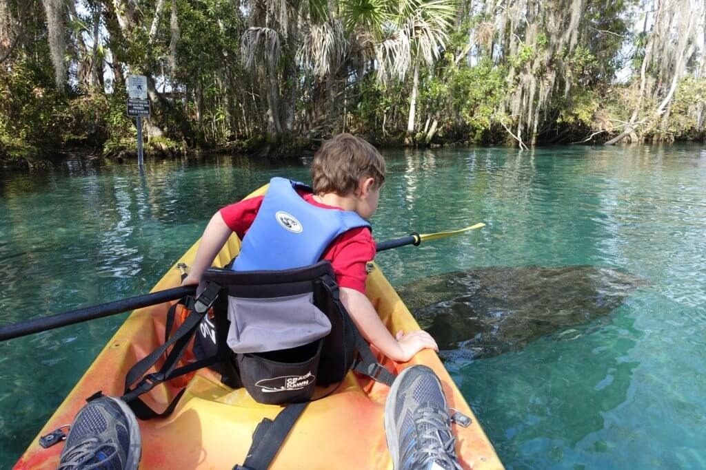 boy in a kayak with a manatee in the water