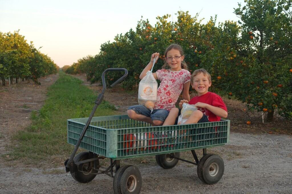 boy and girl in a wagon with orange trees
