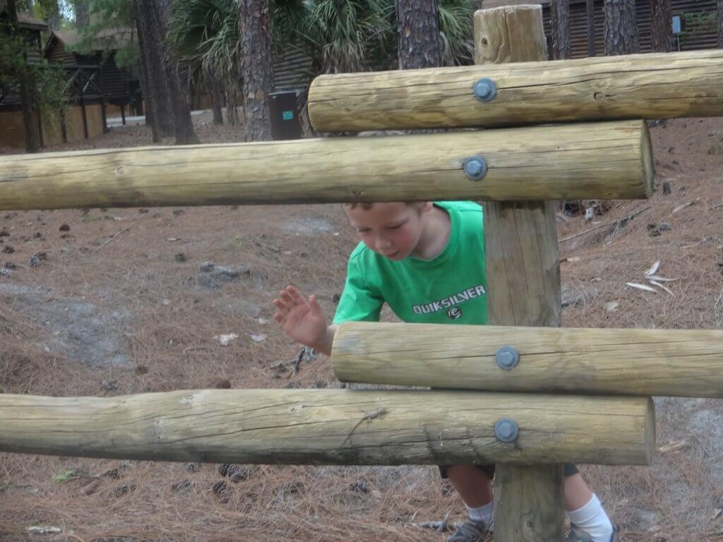 boy catching a lizard on a wooden fence